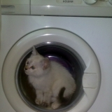 А еще я... на швейной и стиральной машинке умею....!