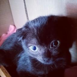Котенок Чуча