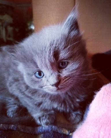 Котенок Пухля