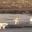 Спасенный в Якутии медвежонок прилетит в Москву - Россия 24